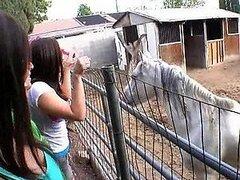 Jovencitas se enloquecen en Granja de caballos y chupan la verga de un chico afortunado
